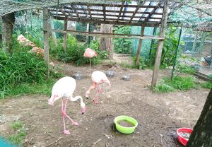 印西市 瀧水寺 白鳥